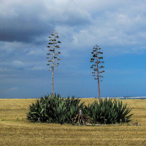 Aloe-Very-Body-Lotion