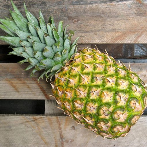 Enzyme-Moisturizer-Pineapple