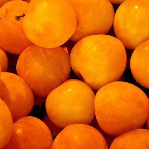 apricot-1534491_1920