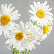 Chamomile—Mum-&-baby-cream-wash