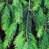 branch-1836065_1280.jpg