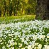flowers-woody.jpg